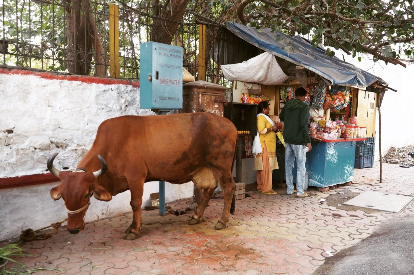 COW in Mumbai