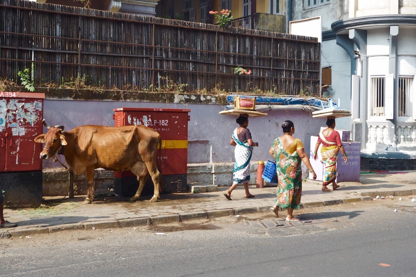 cows and women in Mumbai Bombay
