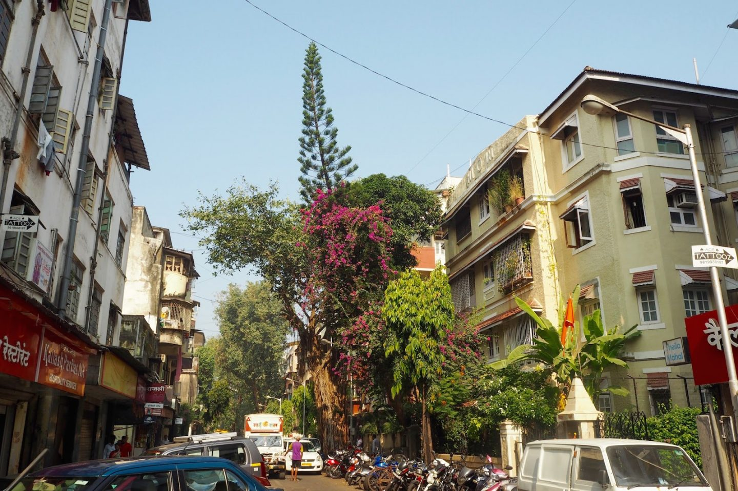 Beautiful plant life taking over the streets of Mumbai