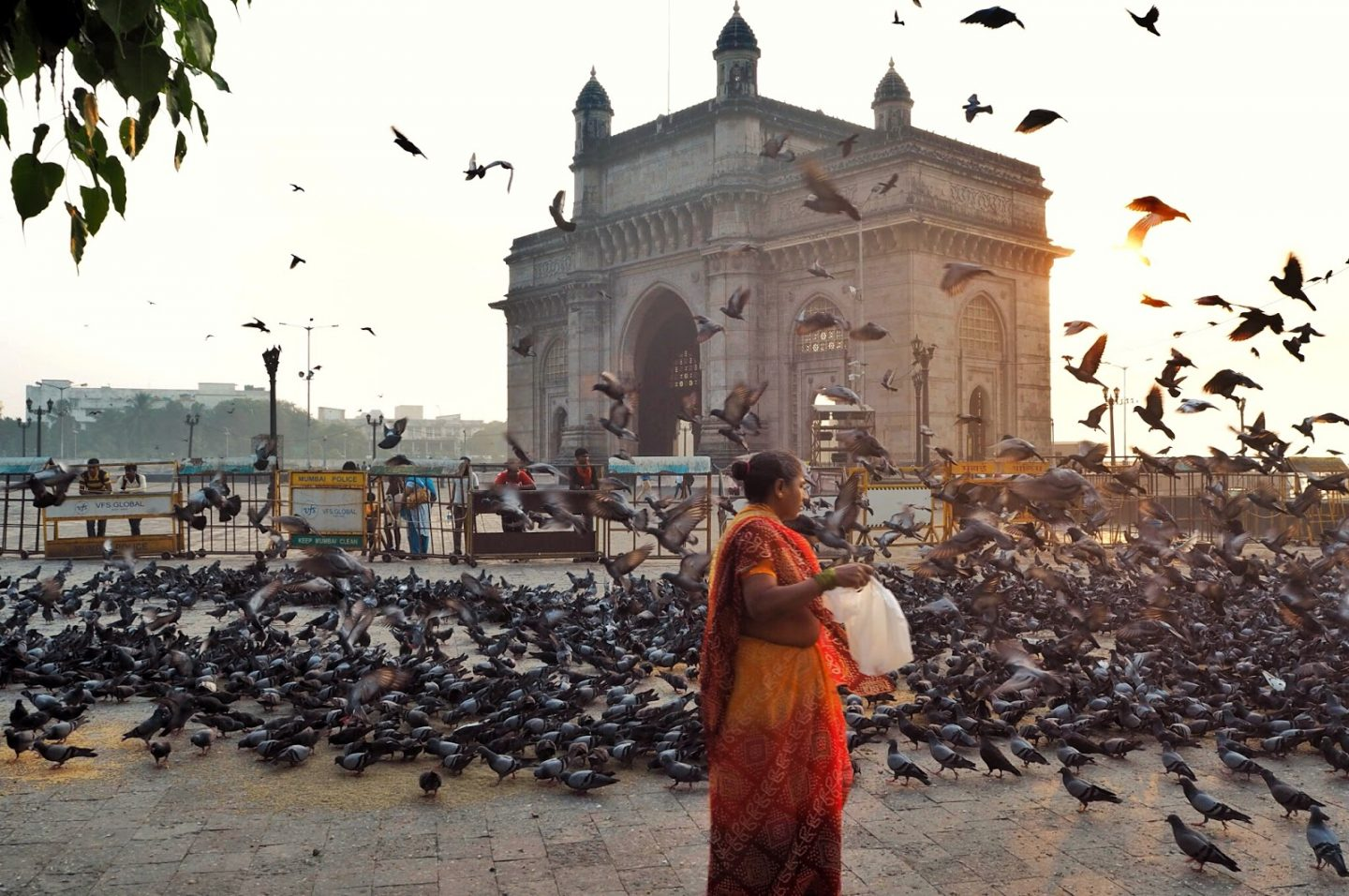 Birds being fed at the gateway of india