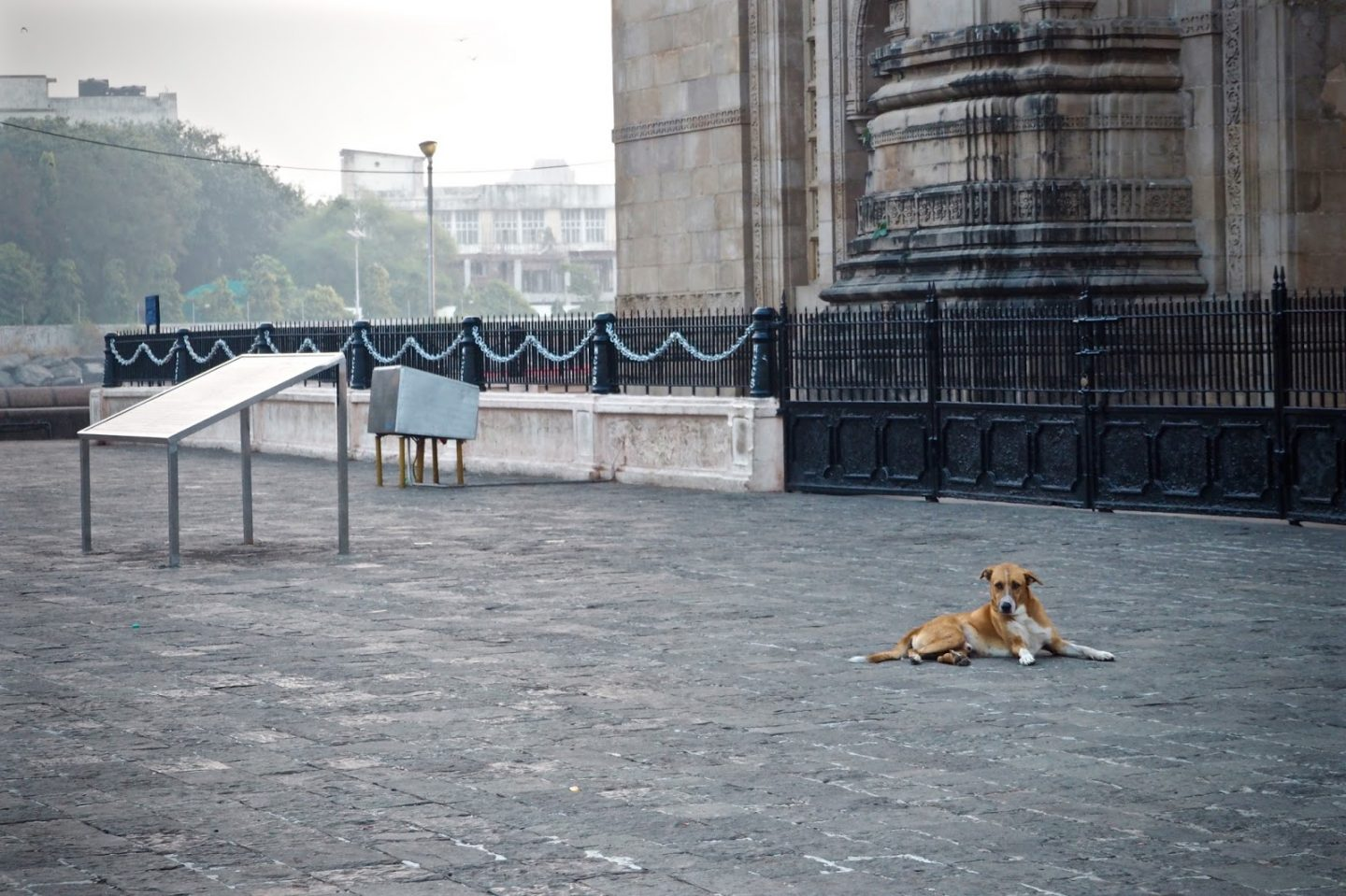 Dog guarding the Gateway of india