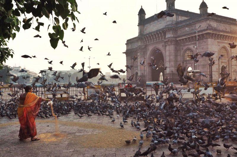 Feeding birds at the gateway of India