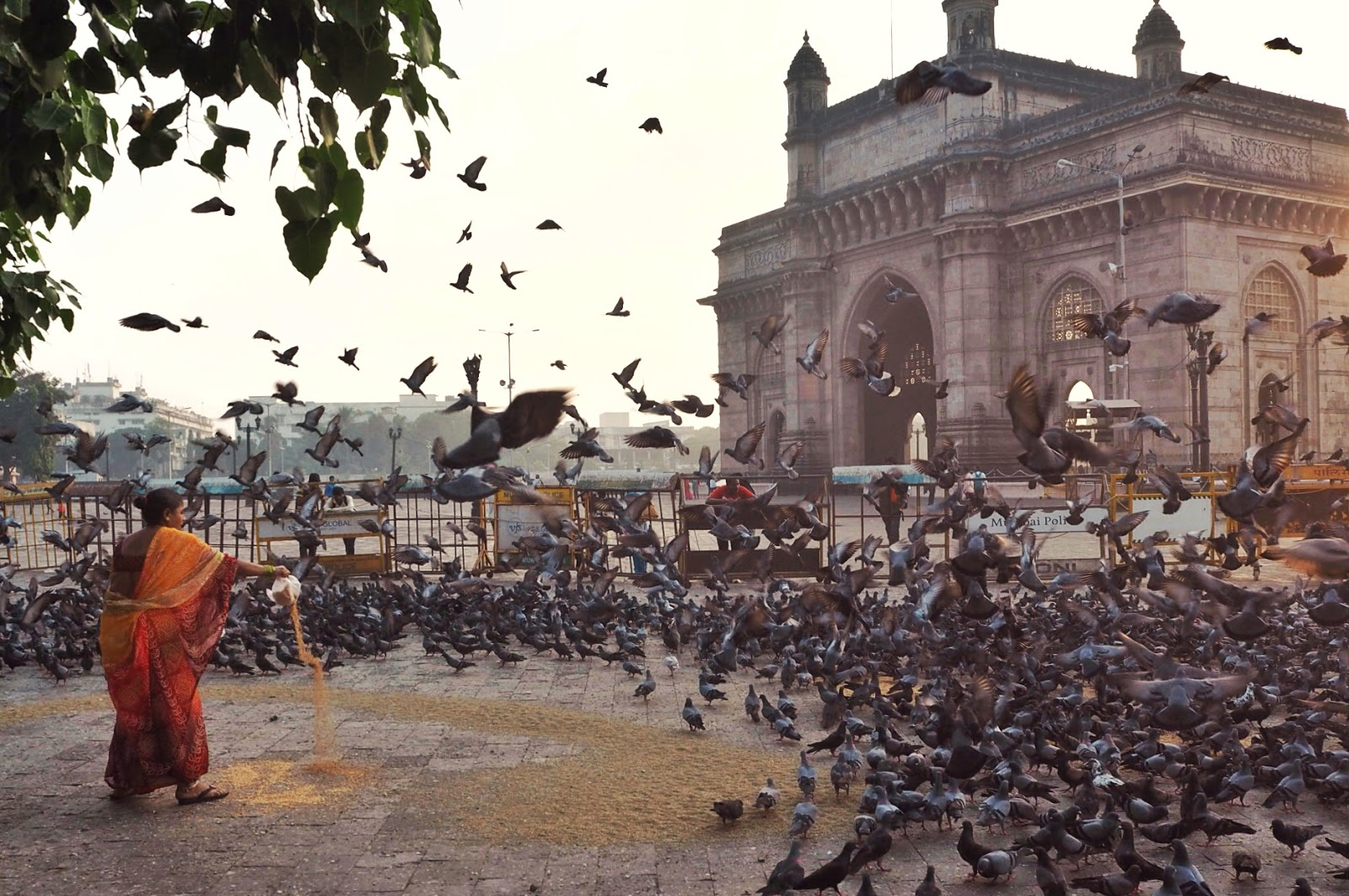 Feeding birds at the gateway of India