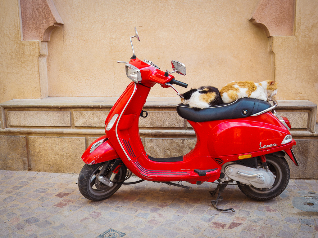 Cats on a moped in Marrakech